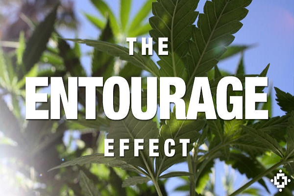 What is the Entourage Effect