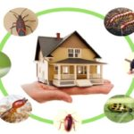 Cleaning Tips for a Pest
