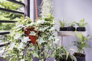 Top 7 Indoor Plants That Can Improve Your Health